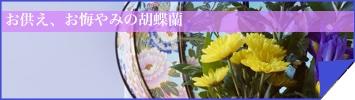 胡蝶蘭専門店ギフトフラワーお供えの胡蝶蘭