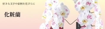 胡蝶蘭専門店ギフトフラワーの化粧蘭
