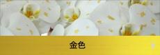 胡蝶蘭専門店ギフトフラワー金色金箔蘭