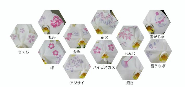 化粧蘭の柄2