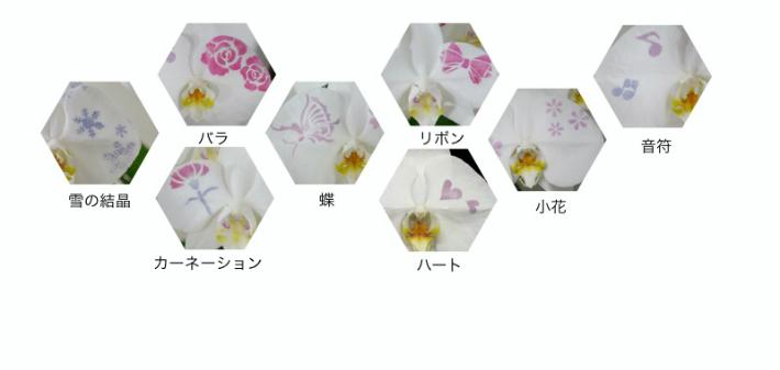 化粧蘭の柄3