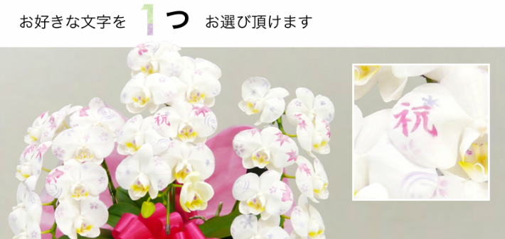 化粧蘭の柄4