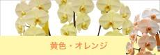 胡蝶蘭専門店ギフトフラワーイエローオレンジ