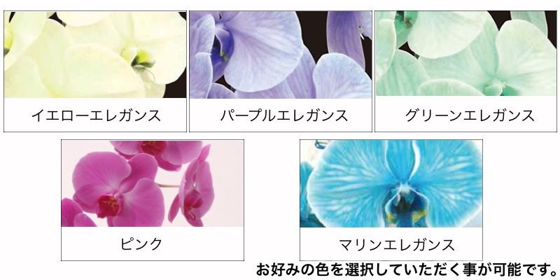 エレガンス胡蝶蘭色種類イエローパープルグリーンピンクマリン
